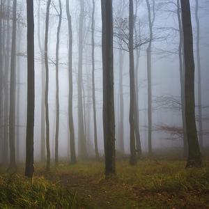 Októbrový les...