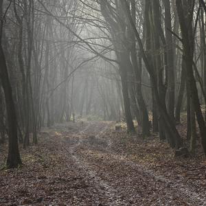 V lese nad Klížskym Hradišťom