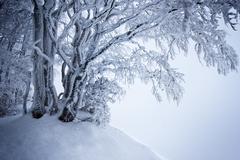 Zamrznutý kraj