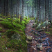 Oáza v lese