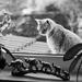 O mačkách a ľuďoch