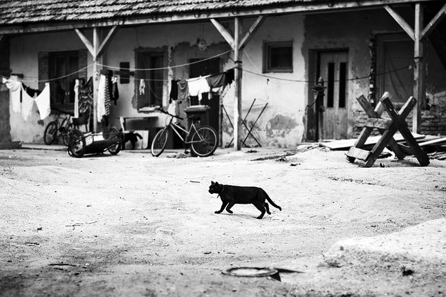 Čierna Africká mačička galérie