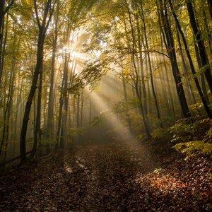 Jesenné rána Malých Karpát