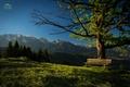 Alpské posedenie