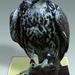 Vták RUMBURAK