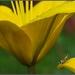 ... toto leto je v móde žltá :)