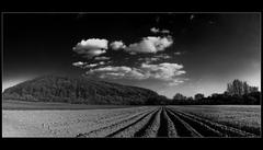 Zemiakové pole.