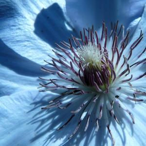 Ľadový kvet