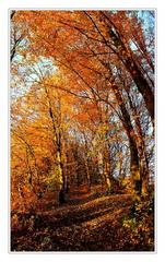 Jesennou cestou ...