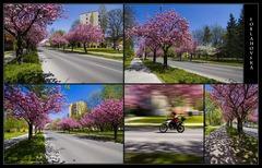 Jar v meste.