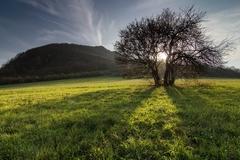 Strom pod Krasínom.