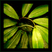 ... green ...