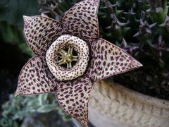 nezvycajny kvet