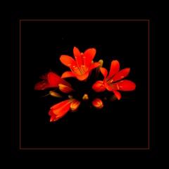 ... flower ...