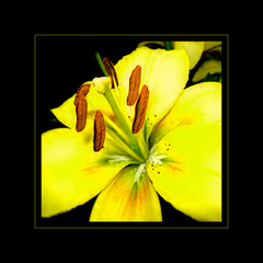 ... yellow ...