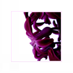 ... flower of hyacinth ...