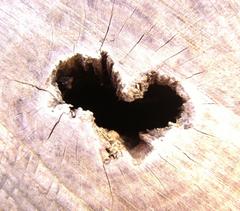 ... heart of tree ...