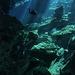 Cenotes III.