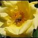 kvet + vcelka :)