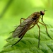 Akýsi hmyz