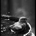 Ranné vtáča...
