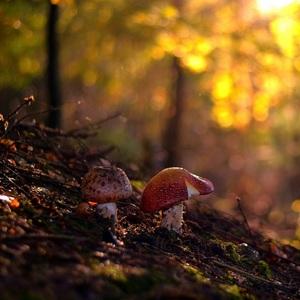 Jesenným lesom..