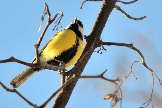 Vtáčik - letáčik