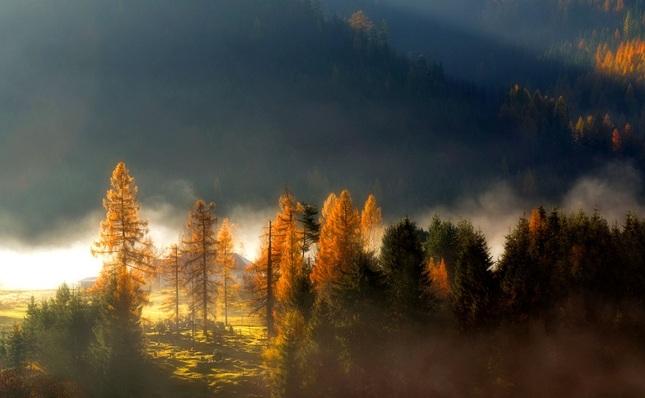 Na samote pri lese...