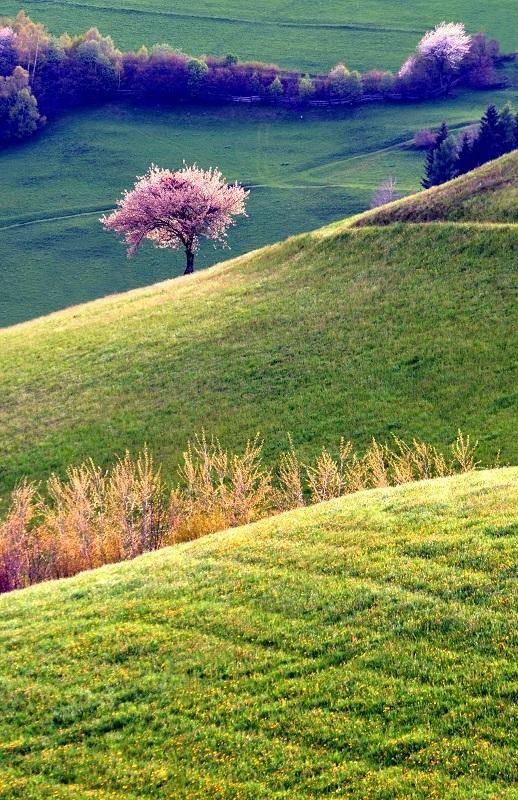 Za kopcami strom stojí..