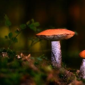 Farby lesa..