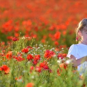 Kvetinka v poli makovom..