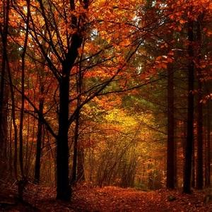 Jesenný les..