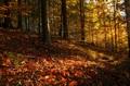 Jesennou horou..