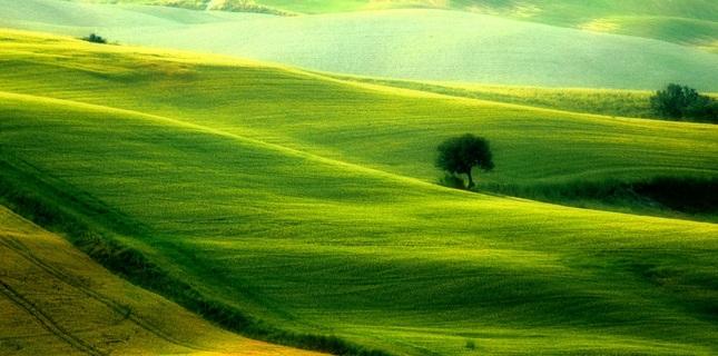 Zelené línie..