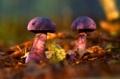 Z jesenného lesa..