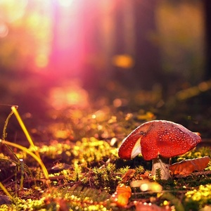 Čaro lesa..