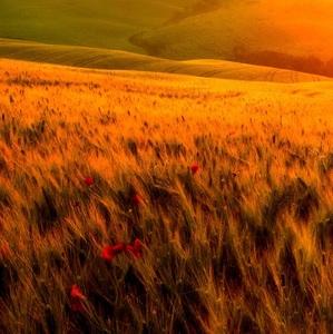 Kde sa vietor v slnka lúči kúpe.
