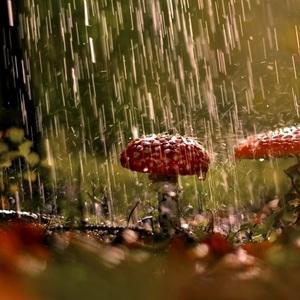 Prší, prší..