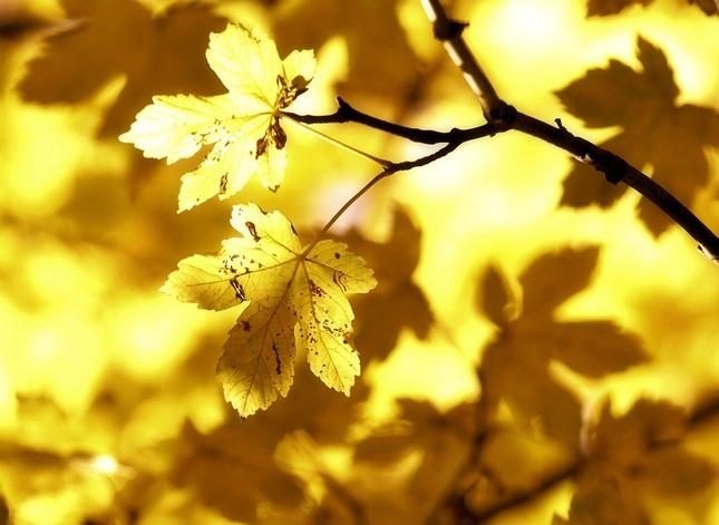 Maliarka jeseň VI