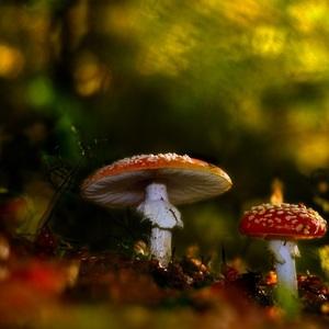 Čarovný les..