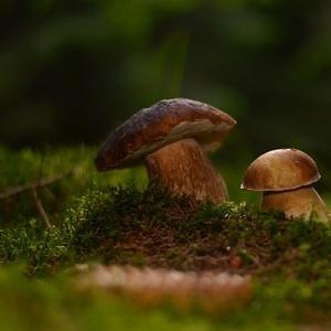 Čo sa v lese skrýva..