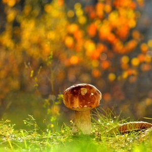 Jesenný dubáčik..