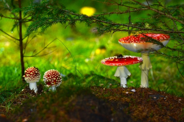 V rozprávkovom lese..