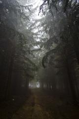 V temnom lese