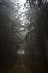 V temnom lese re-edit