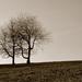 Opustené stromy
