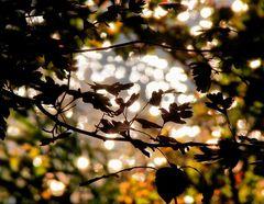 Jesenná nálada....