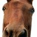 Kôň predsa