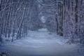cesta zimou.....