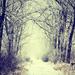 na konci tunela v čarovnom lese